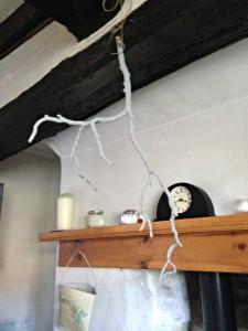 branch6