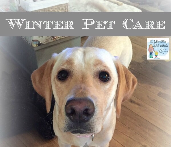 winter pet care is there anything you need to do