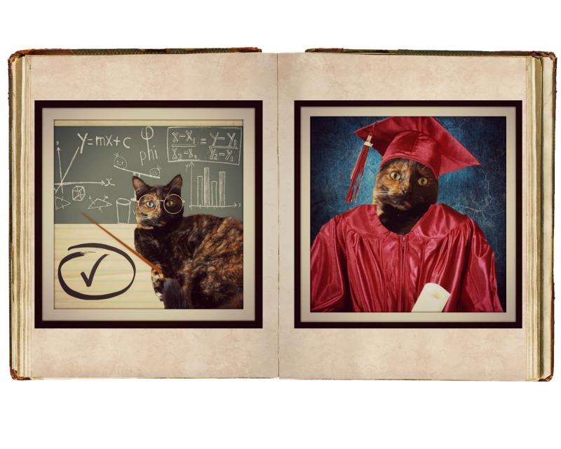 Whiskas Kitten Kollege