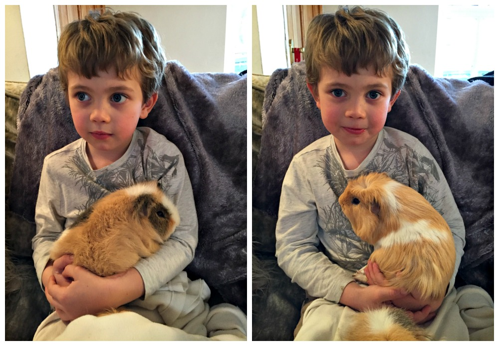 My little boy and his adored Guinea Pigs