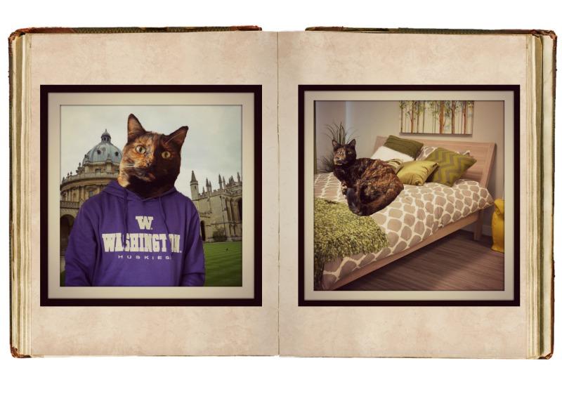 whiskas Kitten Kollage