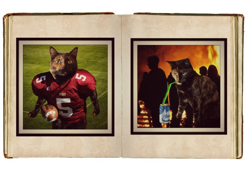 whiskas kitten kollage yearbook