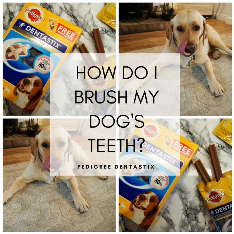 how do i brush my dogs teeth? Pedigree dentastix