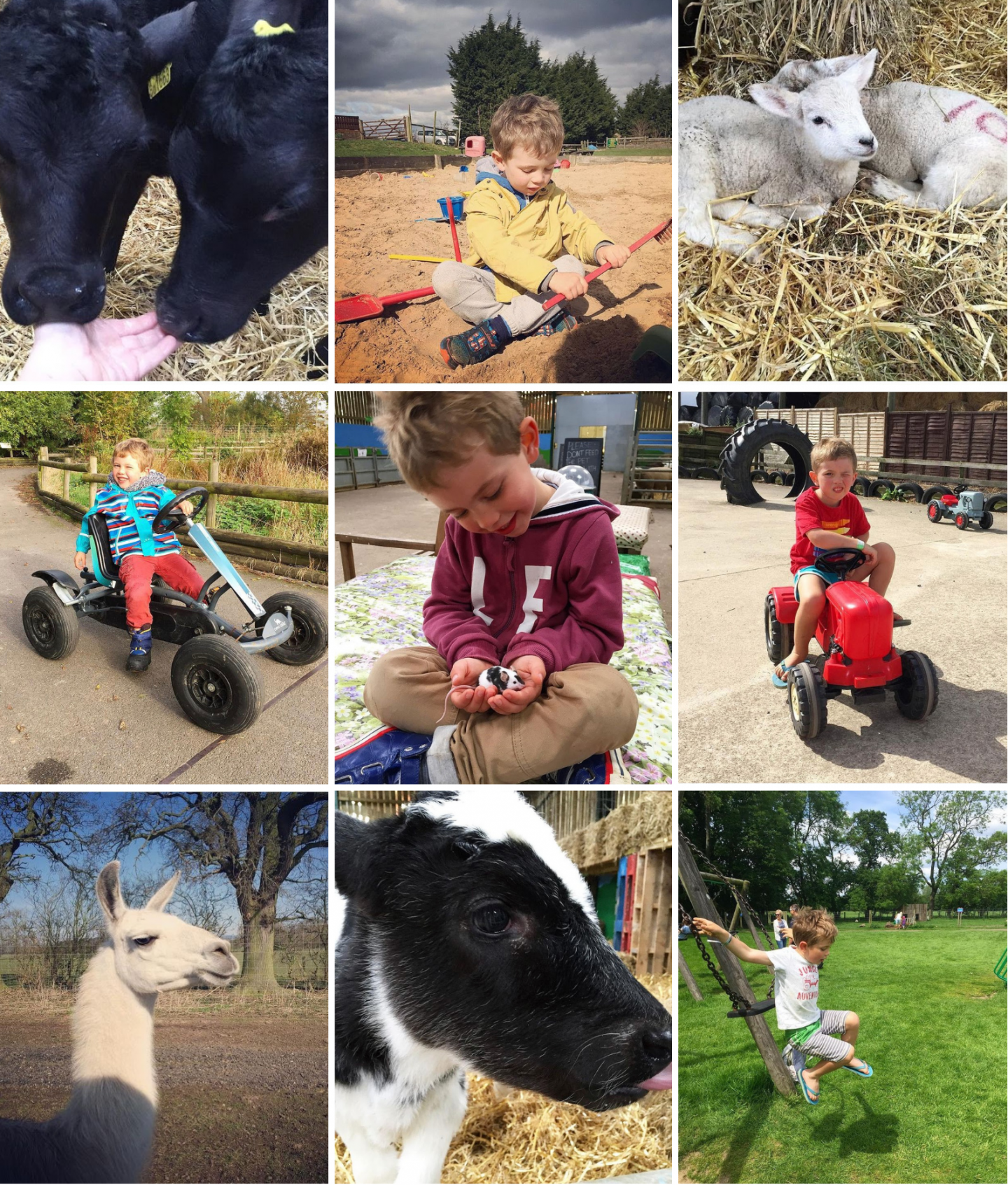 A collage of our memories at Monk Park Farm